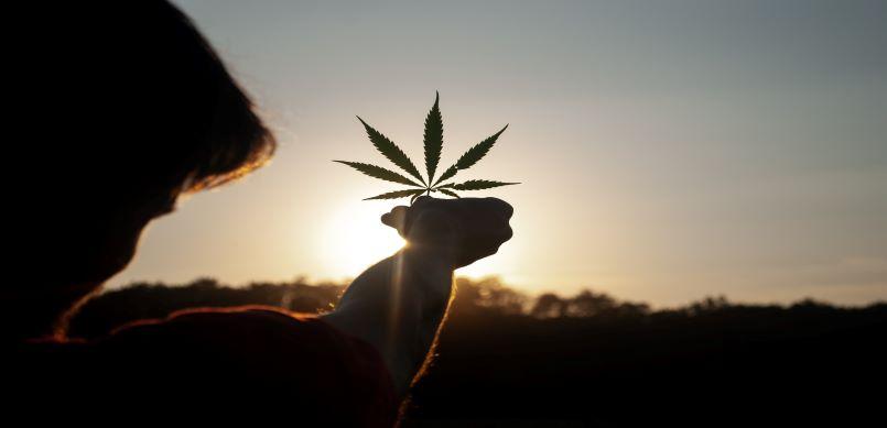 Holding cannabis leaf in sun